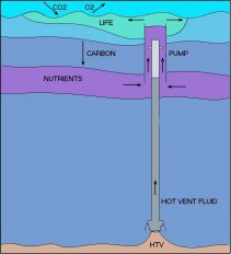 Using energy from a hydrothermal vent to pump nutrient to the surface of the ocean.